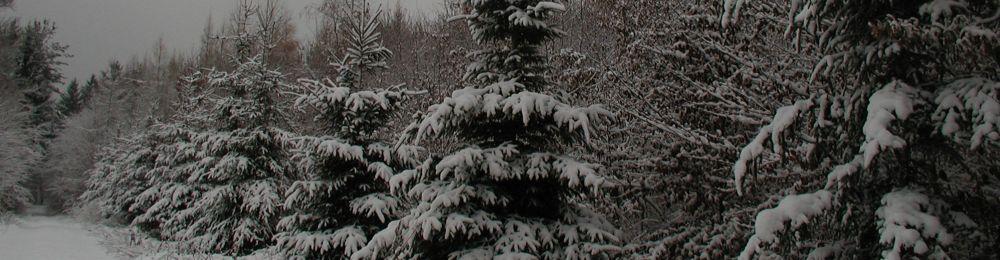 Bettlach-Linsdorf forêt sous la neige