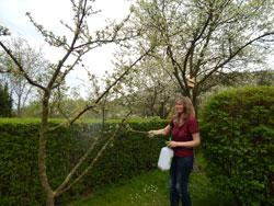 Baum besprühen