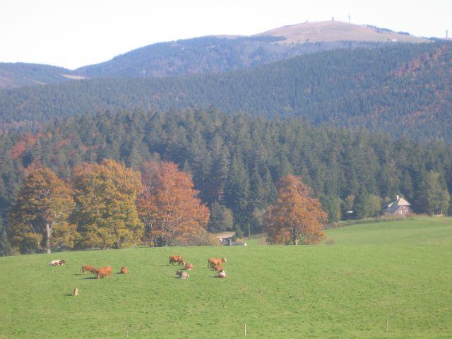 Urlaub Auf Dem Haldenmeierhof In 79254 Oberried Hofsgrund
