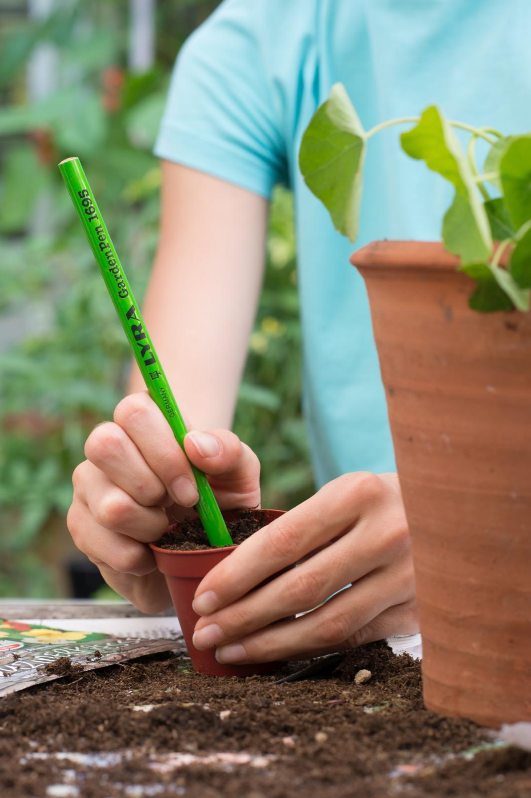 Anzucht von Gemüsepflanzen auf der Fensterbank mit frux Kräuter- & Aussaaterde