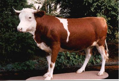 Kuh-Kunst Kuh-Dekor Kuh-Aufkleber Steer Bull Kunst