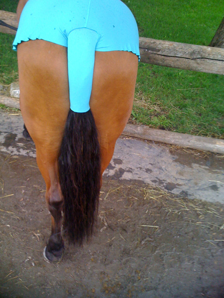 воблер синдром у лошадей