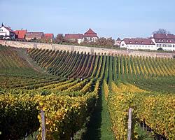 Weinberg des Weinguts Bohnenstiel